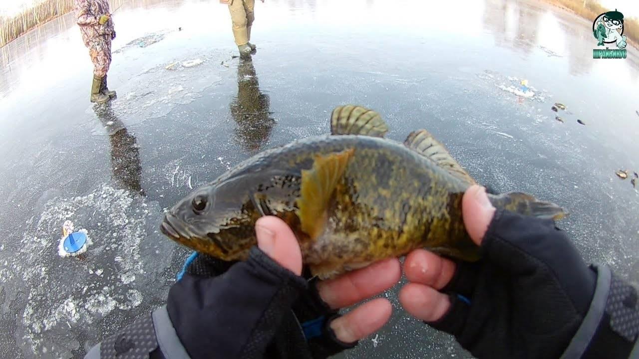 Ловля ротана зимой – тонкости и секреты