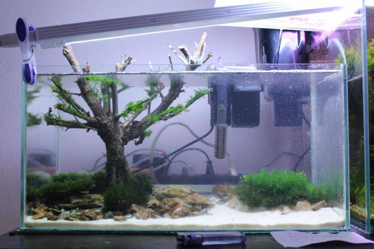Грунт для аквариума своими руками: какой лучше, гравий, кварцевый песок, питательная подложка, как почистить дно