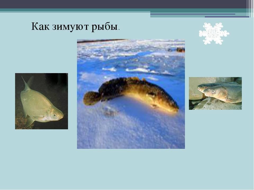 Спят ли рыбы в аквариуме и как это можно понять?
