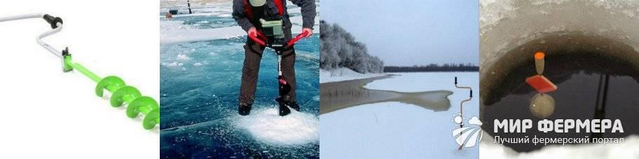 Ловля сазана зимой со льдя: какие снасти и приманки использовать