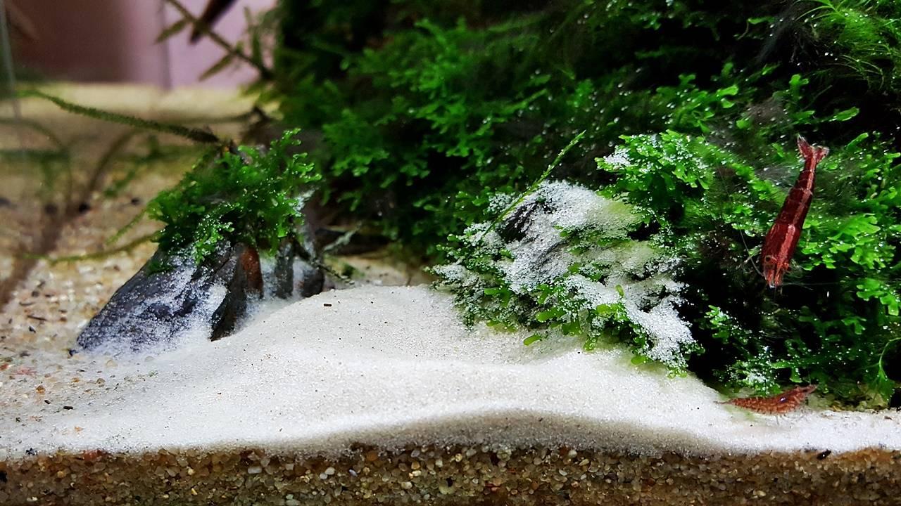 Песок для аквариума: основные виды, преимущества песка для аквариума, как его подготовить