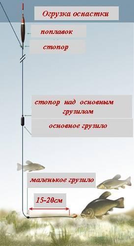 Ловля линя: на что клюет, выбор места для рыбалки, как поймать на удочку, фидер