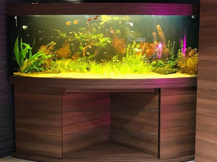 10 лучших аквариумов