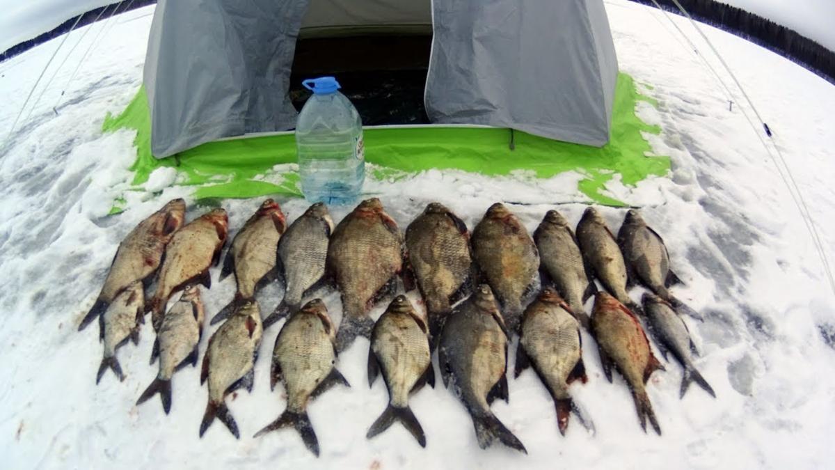Ловля плотвы зимой: выбор наживки и места