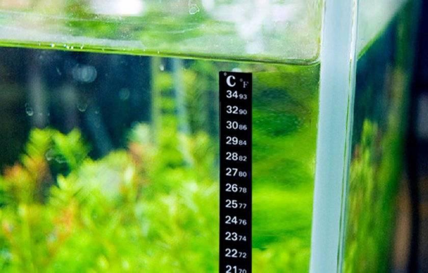 Как охладить воду в аквариуме: почему это важно для рыбок, как остудить летом в жару своими руками, сколько градусов должна быть жидкость в любую погоду?