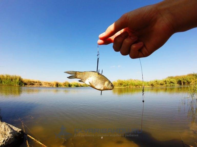 Живая наживка для рыбалки | где и как использовать