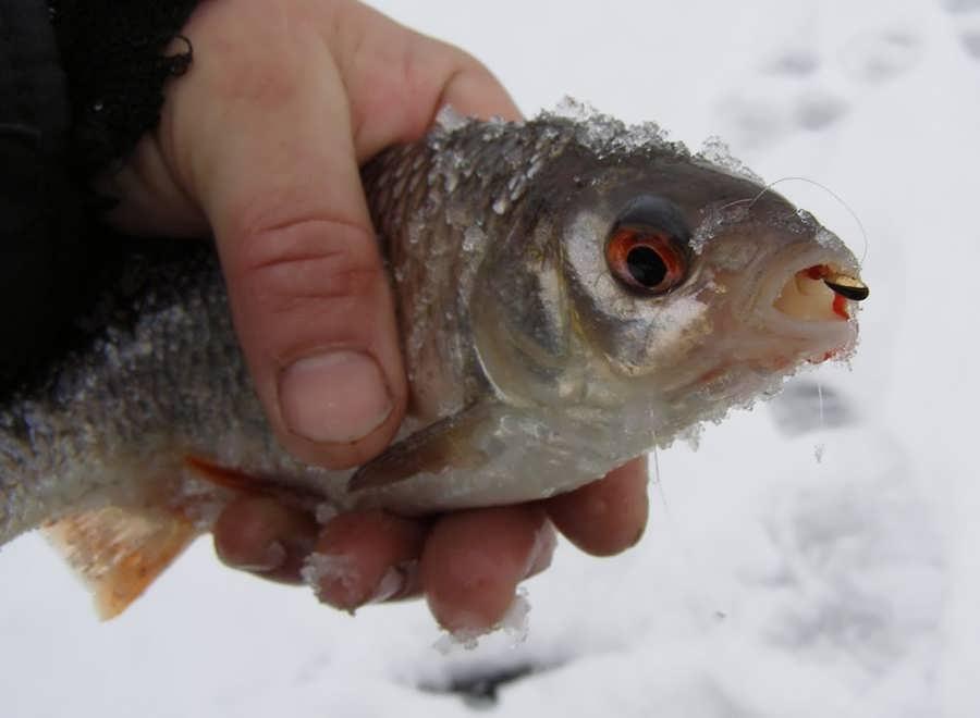 Ловля плотвы по первому льду