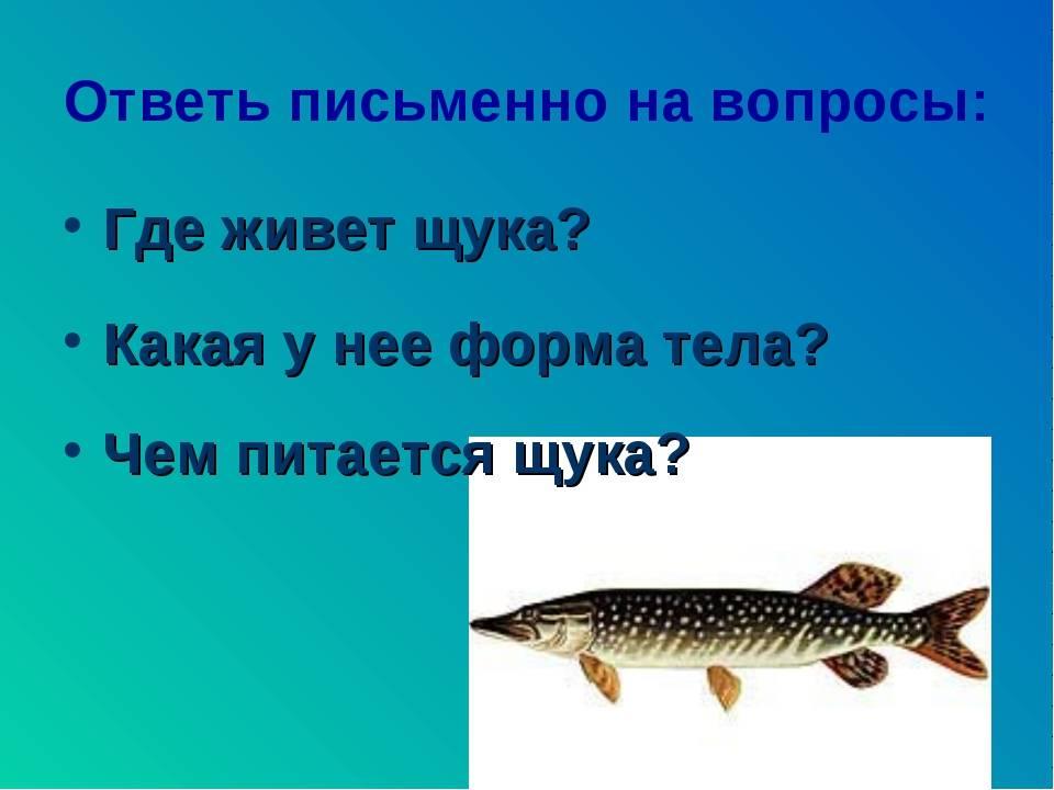 Рыба щука: описание и искусственное разведение