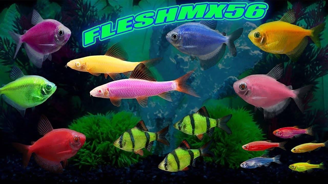 Особенности содержания светящейся аквариумной рыбки неон