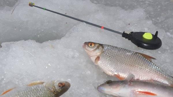 Как ловить зимой плотву на поплавок и оснастить поплавочную снасть