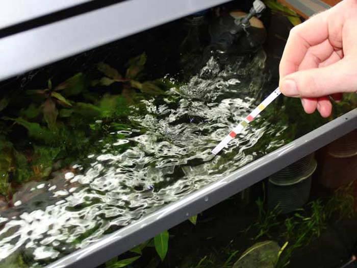 Какую воду заливать в аквариум для рыбок?