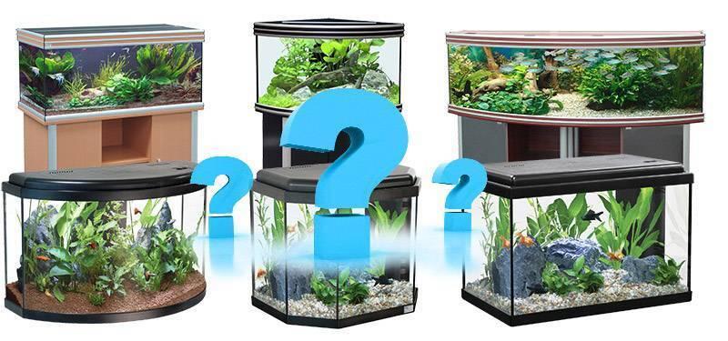 Большие аквариумы для дома: плюсы и минусы, выбор, обустройство, запуск рыбок, инструкция изготовления своими руками