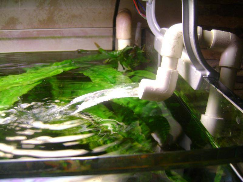 Как менять воду в аквариуме (подмена с рыбками): сколько раз нужно, как часто, когда, нужно ли, как правильно