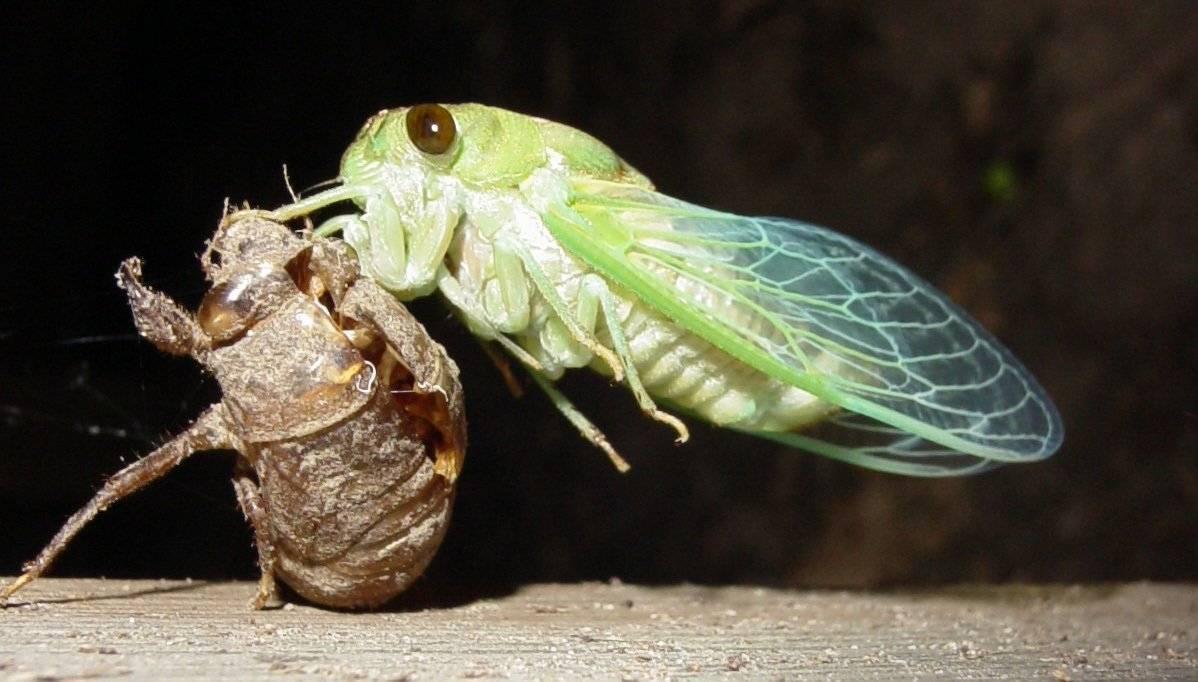 Жук-олень насекомое. описание, особенности, виды, поведение и среда обитания жука-оленя