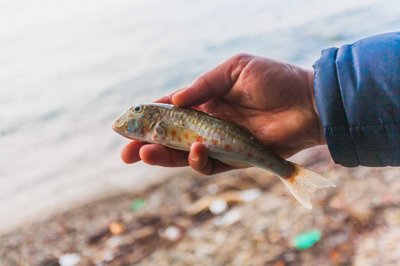 Зимняя рыбалка с берега на азовском море фото видео