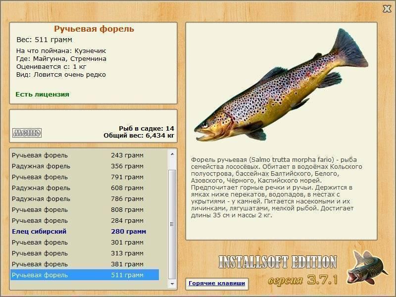 Рыба омуль?: фото и описание. как выглядит омуль?, чем питается и где водится