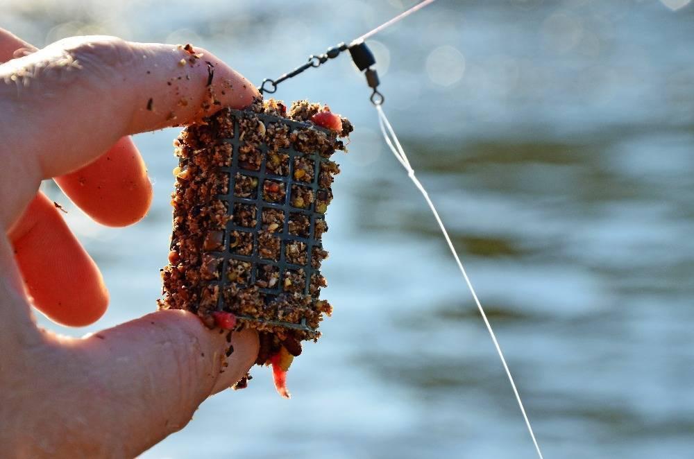 Ловля на спиннинг с берега для начинающих: как собрать, закидывать бланк и успешно ловить хищника