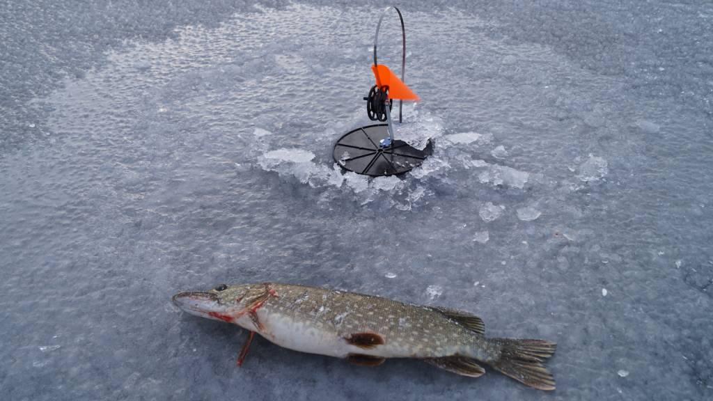 Ловля щуки на жерлицы зимой на водохранилище – все о рыбалке