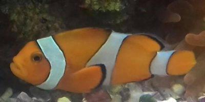 Спят ли аквариумные рыбки