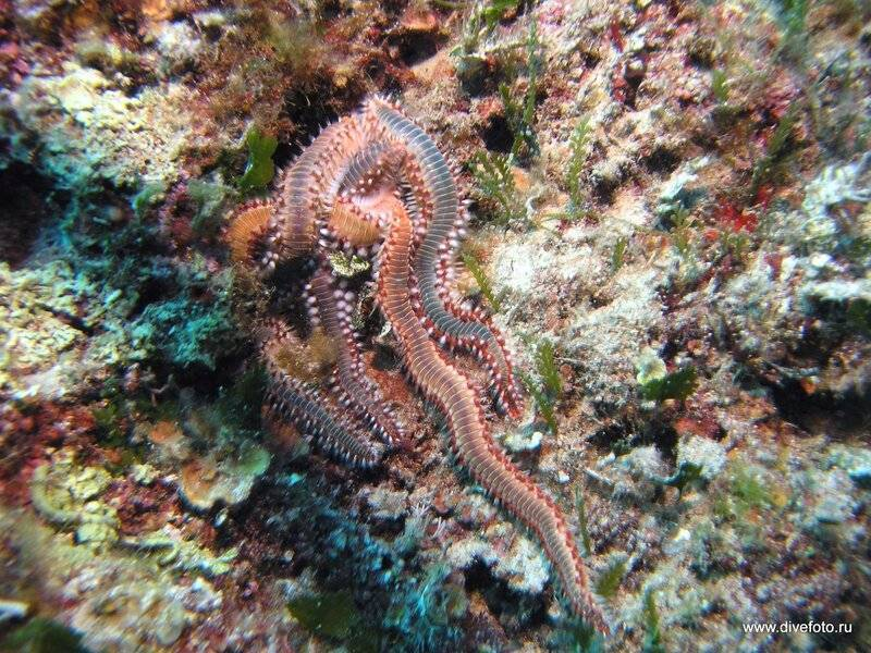 Морские многощетинковые черви (полихеты): форма тела и строение, размножение, практическое значение