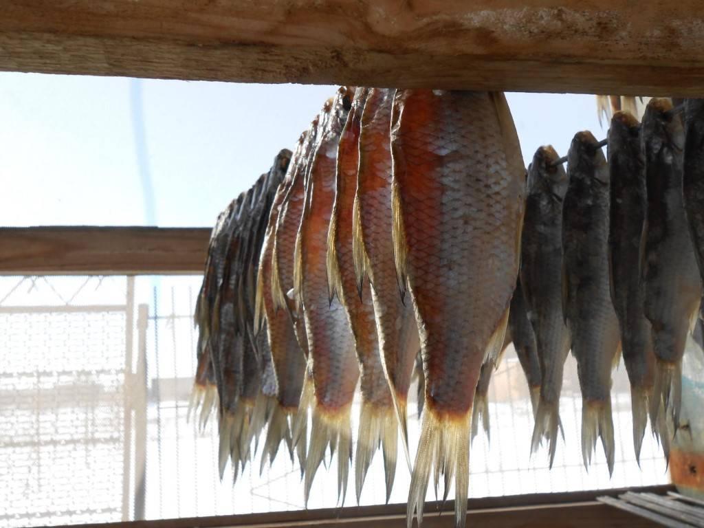 Вобла: особенности рыбалки, места обитания, описание