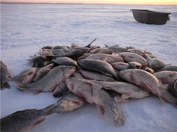 Озера курганской области: соленые, большие, для отдыха дикарями, для рыбалки, фото озер.