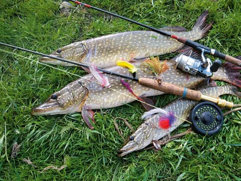 Удочки для рыбалки: виды рыболовных снастей, особенности и стоимость