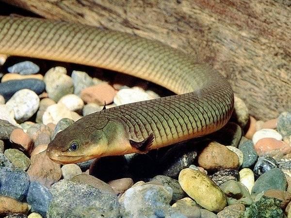 Это настоящая змея или рыба в аквариуме?