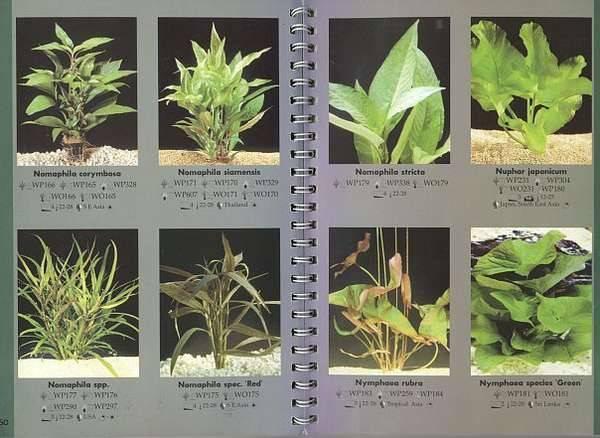 Растения для аквариума: запуск аквариума с растениями, виды, фото