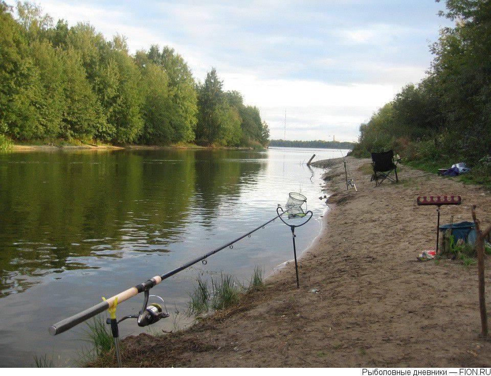 ✅ прогноз клева рыбы в шатуре - danafish.ru