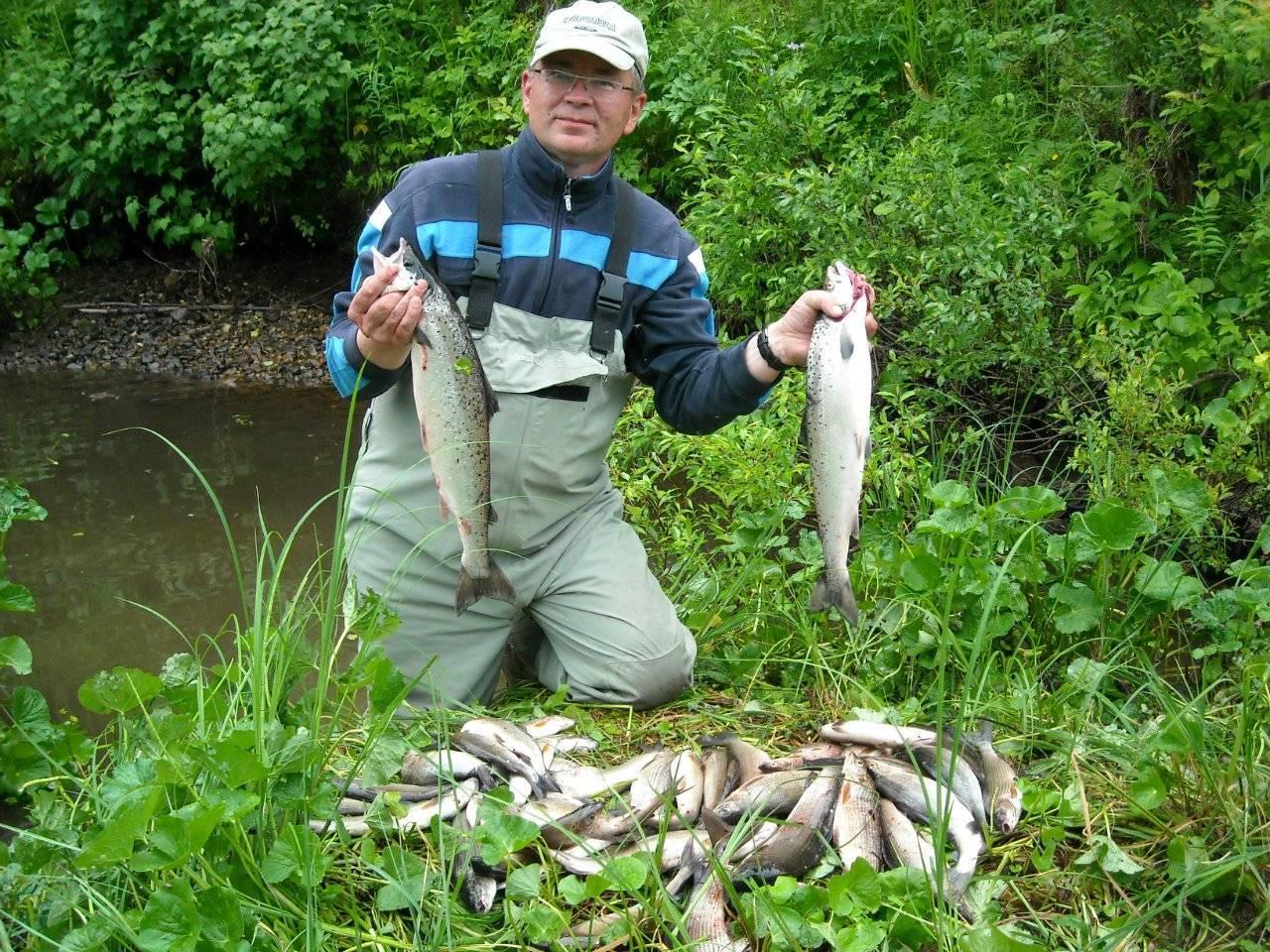 Платная рыбалка в архангельской области: рыболовные туры, охотничьи базы и водоемы архангельской области