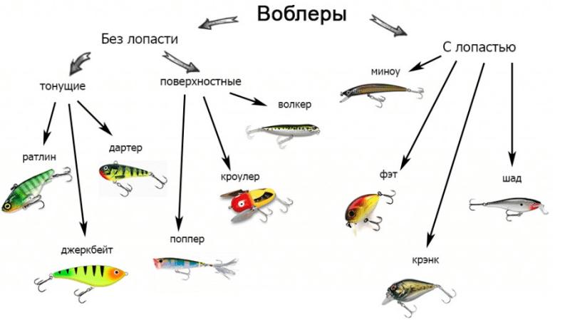 Пикша – рыба морская или речная, где водится и как ловят, полезные свойства