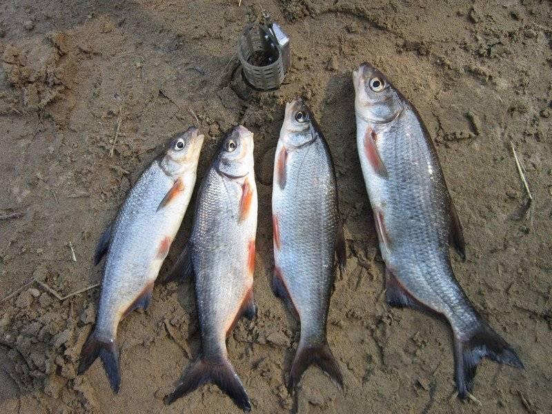 Рыбалка в темрюке