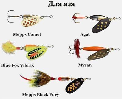 Язь: описание рыбы, ареал и образ жизни