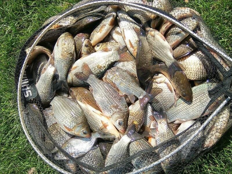Минимально разрешенные к вылову размеры рыбы, для восточно-сибирского бассейна, сохрани в закладки