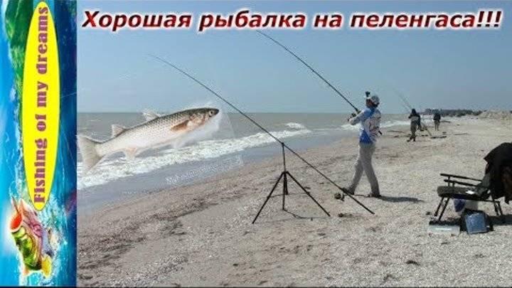 Рыбалка в анапе: советы рыболовов