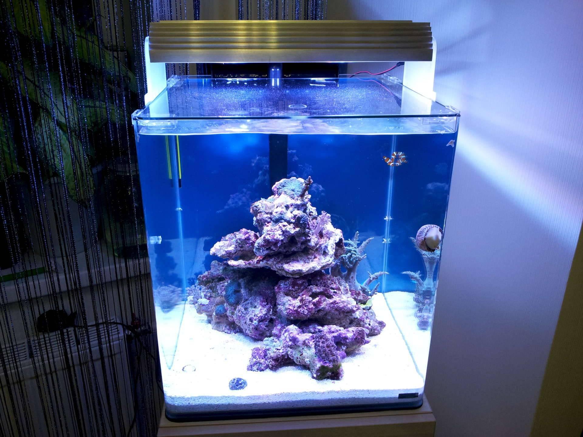 Морской аквариум, с чего начать?