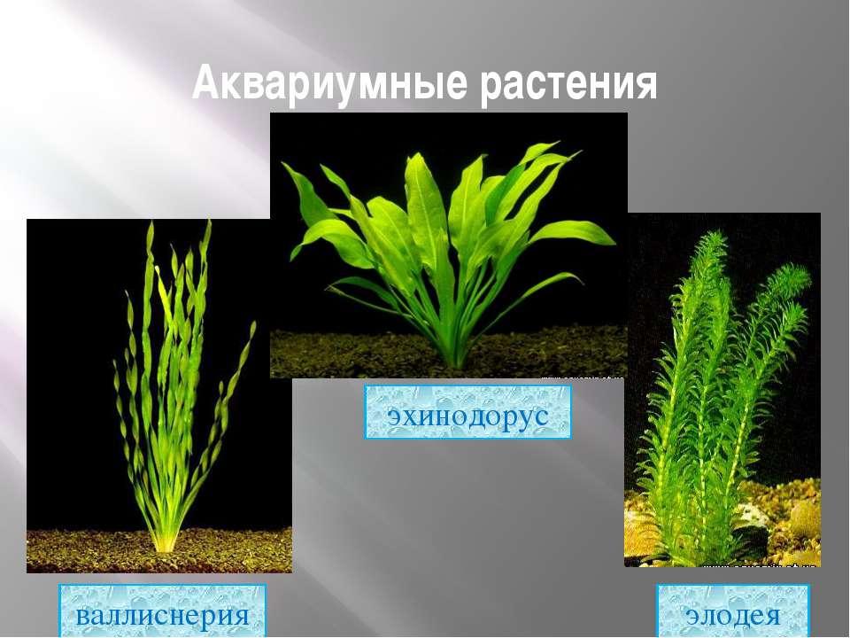 Растения простые в уходе: топ-10 для новичков