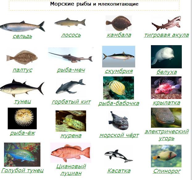 Особенности рыбы-удильщика, или так ли страшен морской черт?