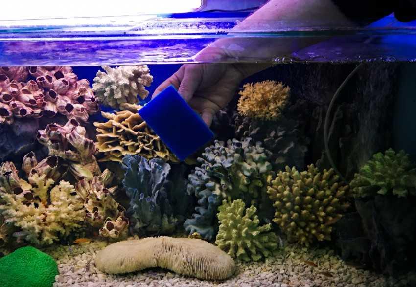 Как почистить аквариум с рыбками в домашних условиях, не сливая воду: фото, видео