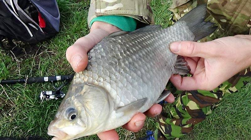Как сделать прикормку для рыбалки в домашних условиях