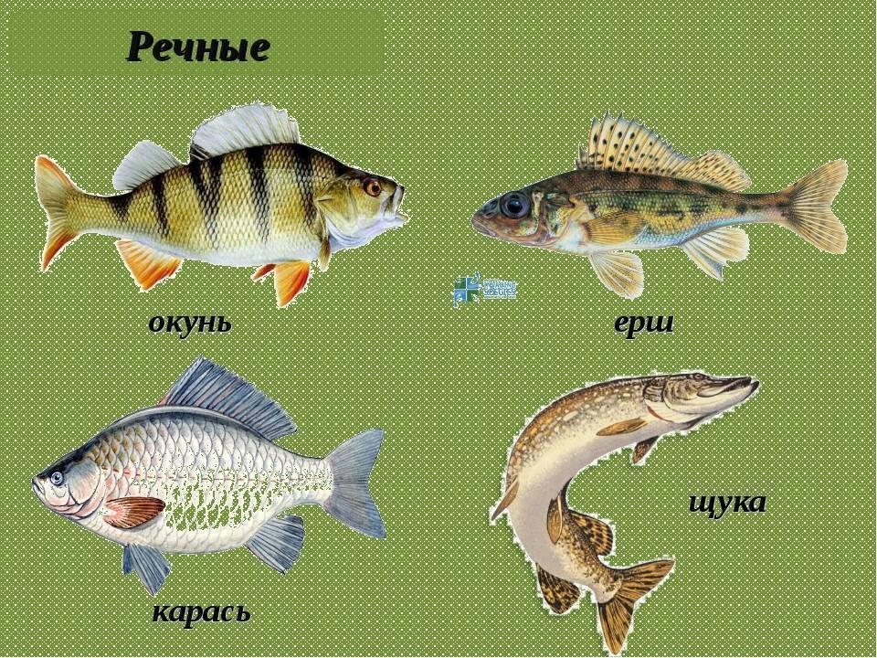 Глава 1. рыбы и среда их обитания [1985 таиров м.т. - рыбоводство и рыболовство]
