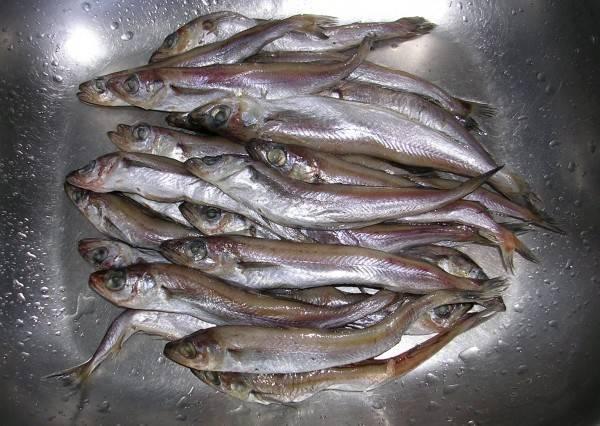 Рыба путассу: польза и вред для организма, состав и калорийность (+отзывы) - вся медицина