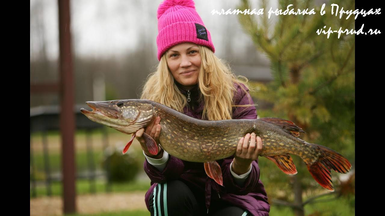 Рыбалка на канале имени москвы: видовой состав рыб, лучшие места для ловли