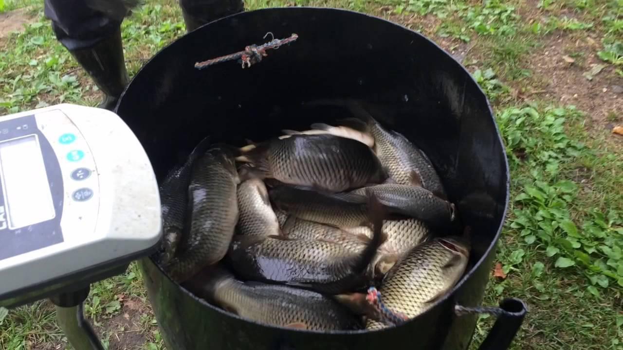 Рыбалка в жестылево