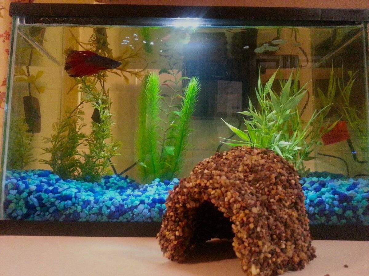 Декор аквариума, украшения своими руками, мастер-класс декорирования аквариума, как самому сделать декор