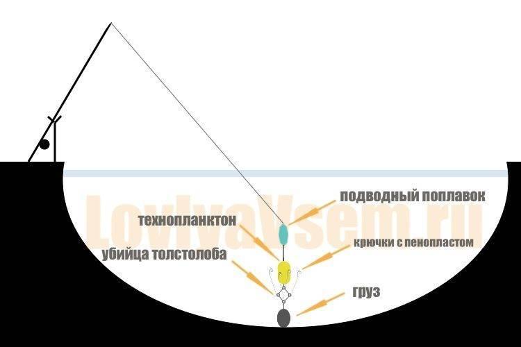 Ловля толстолобика осенью: в сентябре, октябре, ноябре