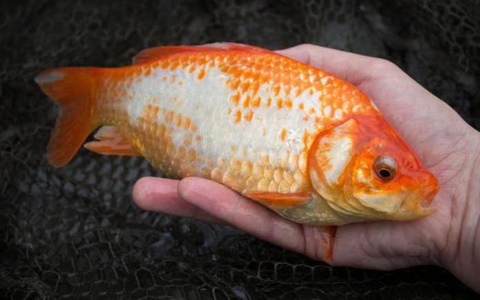 Рыбья чешуя на коже человека: причины, симптомы и лечение ихтиоза