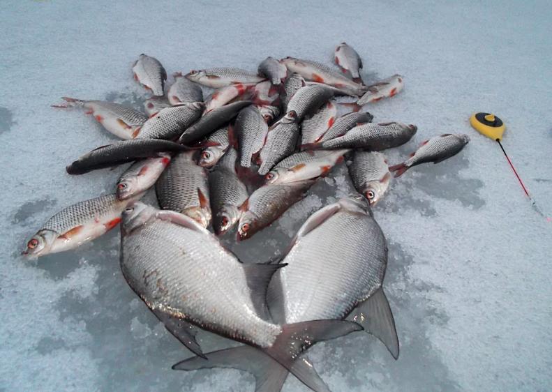 Ловим рыбу в глухозимье