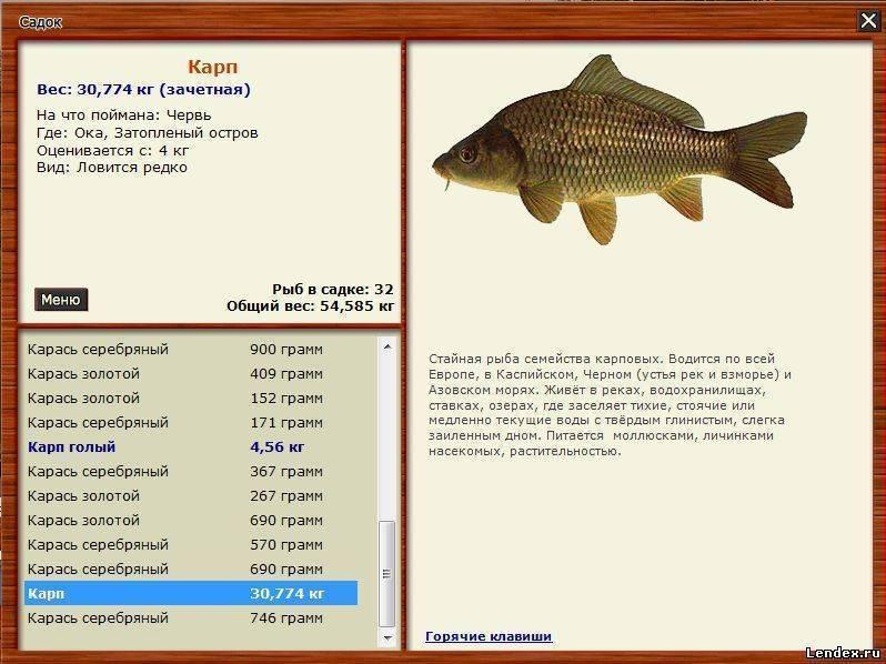 Морская рыбалка в кучугурах: как совместить отдых на курорте с увлекательной рыбалкой - отель лаванда азов